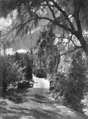 Morris Arboretum, 1933