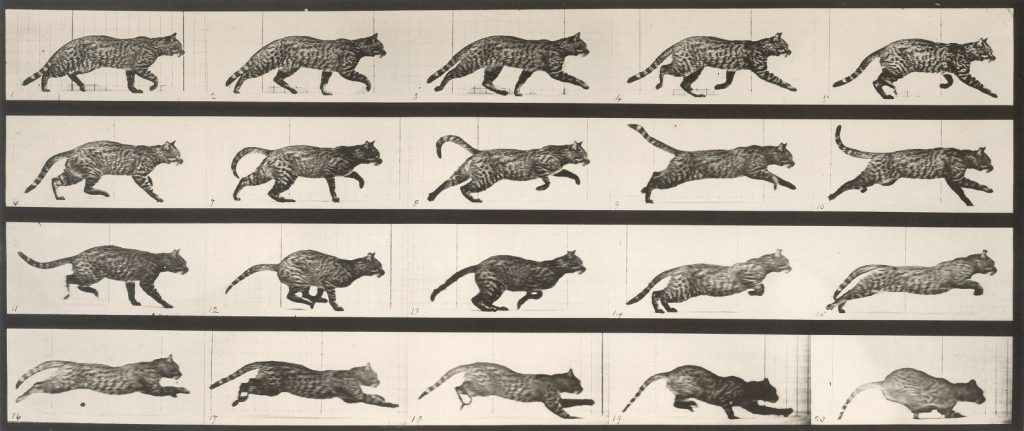 Eadweard Muybridge's Animal Locomotion, plate 717, c. 1887